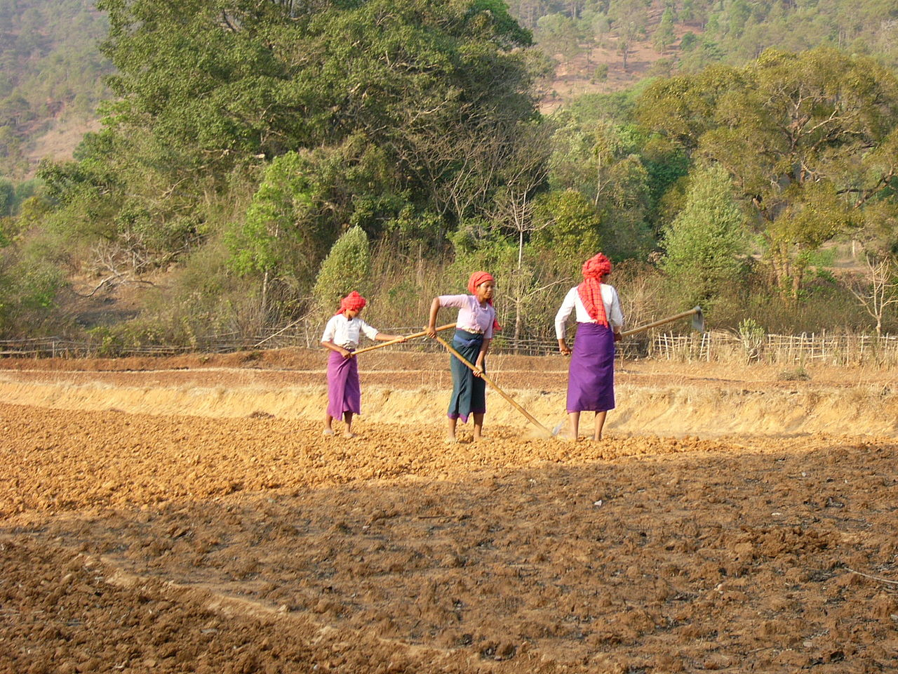 圃場のミャンマー女性(シャン州)