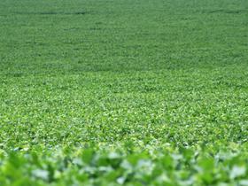ブラジルのダイズ畑。
