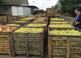 出荷を待つリンゴの山。