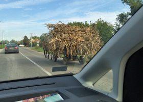 ベオグラード空港に向かう途中、ゆっくりと動く枯草の山に遭遇する。