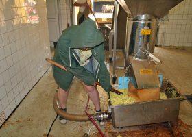 足元までリンゴ果汁でずぶ濡れになりながら破砕したリンゴをパイプに送り込む。