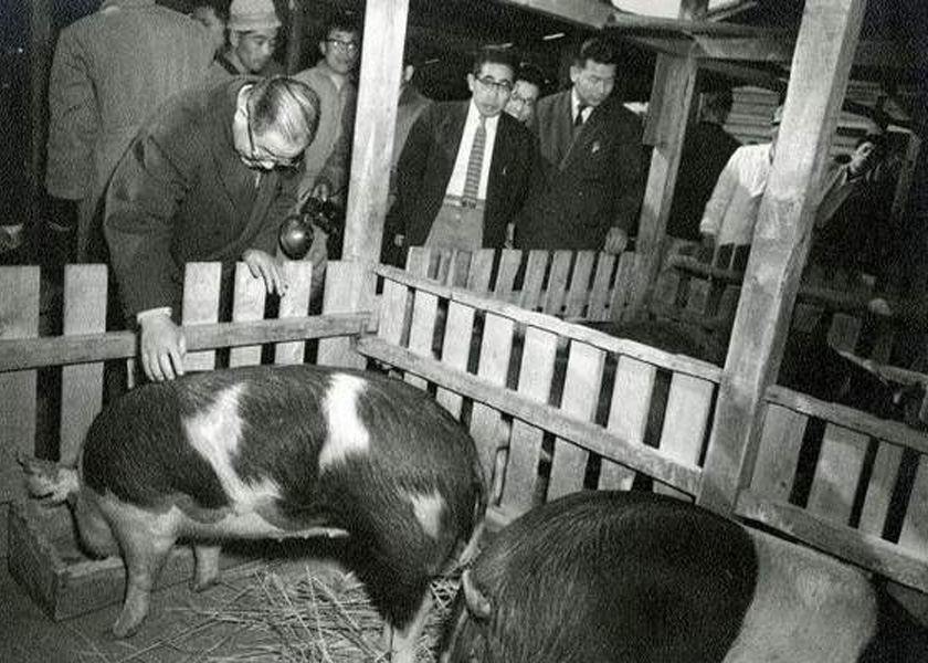 Yamanashi Governor meets the hogs sent from Iowa in 1959 following the Hog Lift.