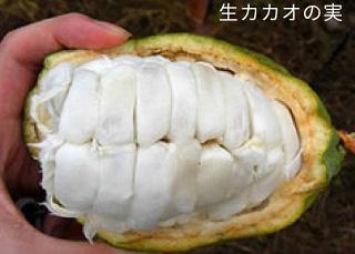 生カカオの実(参考)。綿状の莢の中にカカオ豆が包まれている。