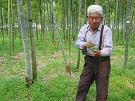 タケヤマの高松求氏。近年はタケの形、表面の色や蝋の状態も格段に良くなり、タケノコの色と味もさらに向上した。品質向上に、消費者の声が影響した部分もあるのかも知れない