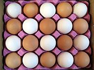 ある農家の鶏卵。人を楽しませる経験の作り方はさまざまだ