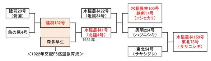 表1 良質水稲品種の基礎を築いた「水稲農林1号」の系譜。