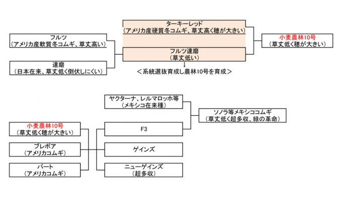 表2 コムギの改良に貢献した「小麦農林10号」の系譜。