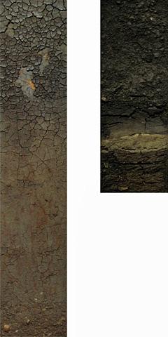 圃場断面標本(モノリス)