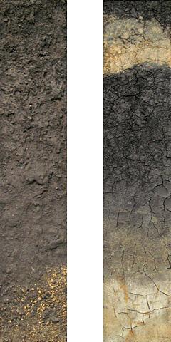 黒ボク土の圃場断面標本(モノリス)