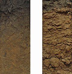 褐色森林土の圃場断面標本(モノリス)