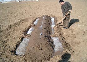 理想的な灌水量を求める試験風景