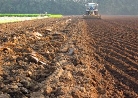 食の源の一つである土壌
