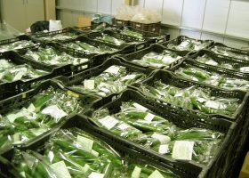 選果・包装されて出荷を待つ野菜