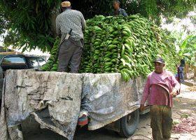 バナナの出荷