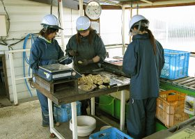 加工用ジャガイモの品質検査