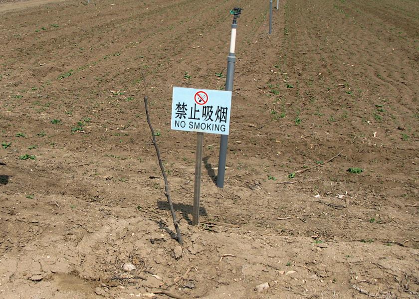 中国のアメリカ輸出用野菜の圃場