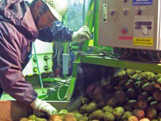 農産物需用者が求めるのは量と質の安定