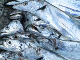 """太刀魚。""""中華揚げ煮""""がおすすめだが、日本人には食べにくいものかもしれない。"""